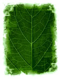 Grunge leaf framed background Royalty Free Stock Image