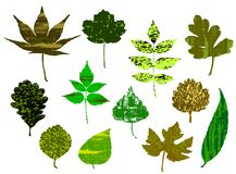 Grunge Leafs Royalty Free Stock Photography