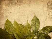 Grunge leaves Stock Images