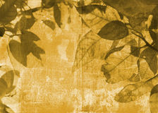 Grunge leaves background. On paper texture with swirls and scrolls Stock Images