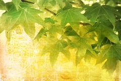 Grunge leaves background Stock Image