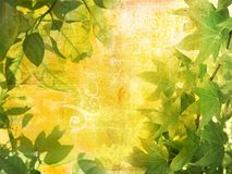 Grunge leaves background. On paper texture with swirls and scrolls Royalty Free Stock Image