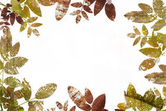 Grunge leaves border Stock Images