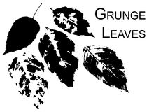 Grunge leaves Royalty Free Stock Photos