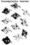 Grunge leaves set Royalty Free Stock Images