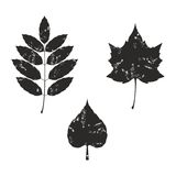 Grunge leaves silhouete 02 Stock Photo
