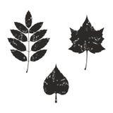 Grunge leaves silhouete 02. Grunge leaves silhouete set 02 Stock Photo