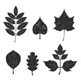 Grunge leaves silhouete set 01 Stock Photography