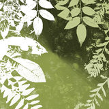 Grunge Leaves Silhouette Royalty Free Stock Image