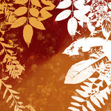 Grunge Leaves Silhouette Stock Photos