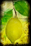 Grunge lemon Royalty Free Stock Photos