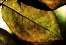 grunge liści szczególne Zdjęcie Stock