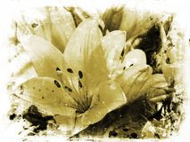 Grunge lillies Royalty Free Stock Image