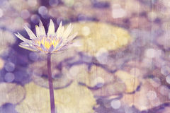 Grunge lily Royalty Free Stock Photo