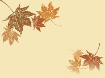 Grunge maple leaf. Beautiful grunge dancing maple leaf Royalty Free Stock Photo