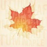Grunge maple leaf background Royalty Free Stock Photos
