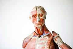 Grunge Menschenanatomie Lizenzfreie Stockbilder