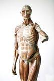 Grunge Menschenanatomie Stockbild