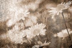 Grunge metal daisies background Stock Images