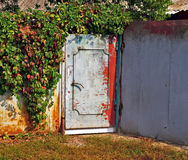 Grunge metalldörr som omges med den Virginia rankan royaltyfri bild