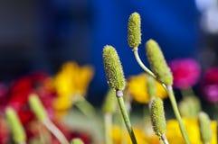 Grunge mit Blumen Lizenzfreies Stockbild