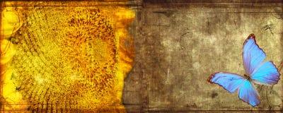 grunge motyli słonecznik Zdjęcia Royalty Free