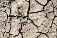 Grunge mud cracks texture Royalty Free Stock Photos