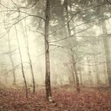Grunge mystic forest. Grunge mystic autumn forest trees. Grunge and noise filter effect used Royalty Free Stock Photography