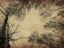 Grunge nadzy drzewa ilustracji