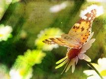 Grunge nature scene. Abstract grunge nature scene butterfly on daisy flower stock image