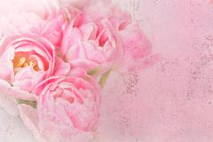 Grunge nostálgico das flores cor-de-rosa da tulipa fotos de stock royalty free
