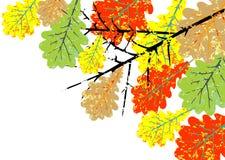 Grunge oak leaves Stock Image