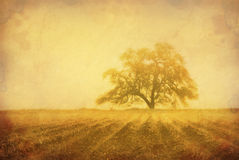 Grunge Oak Tree. Grunge sepia oak tree in Winter fog, intentionally aged antique look, cultivated farm land in foreground with fog in furrows Royalty Free Stock Image