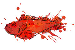 Grunge ocean perch illustration Stock Photos