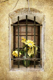 Grunge Old Barred Window with Flowers Stock Photo