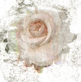 Grunge old rose art paint for background Royalty Free Stock Images