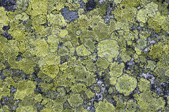 Grunge old stone background. With moss Royalty Free Stock Photos