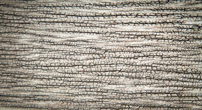 Grunge old wood background Royalty Free Stock Photography
