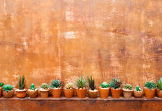 Grunge orange wall background with flowerpot Royalty Free Stock Photos