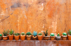 Grunge orange wall background with flowerpot Royalty Free Stock Photography