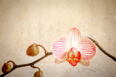 Grunge orchid flower Royalty Free Stock Photo