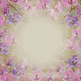Grunge orchid flowers background stock images