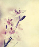 Grunge Orchid Flowers Royalty Free Stock Images