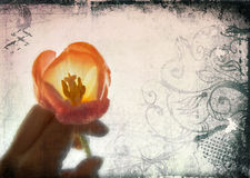 Grunge page of flower royalty free stock photo