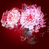 Grunge painting peony flowers. Stock Images