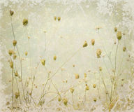 Grunge Pale Meadow Flower Art Background Stock Photo