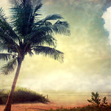 Grunge palm-5. Grunge palm background in summer style Royalty Free Stock Photos