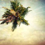 Grunge palm. Background in summer style Stock Photo