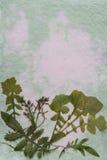 Grunge paper Royalty Free Stock Image