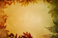 Grunge paper with leaves vignette. Stock Photos
